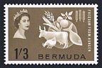 Bermuda 192