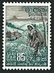 Ceylon 353 mlh